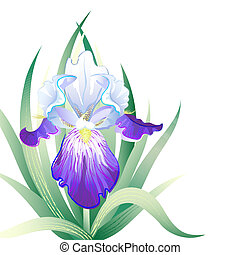 Vector holidays card with Iris flower