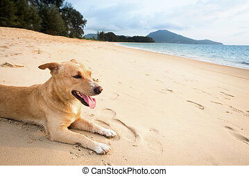 Relaxed dog on tropical beach - Dog relaxing on sand...