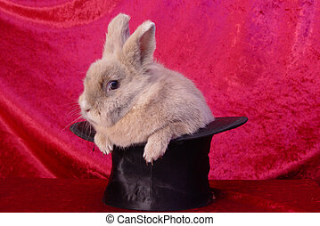 bunny in a stovepipe hat