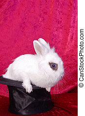 white bunny in a stovepipe hat - bunny in a hat