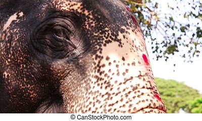 Close-up view of elephant head