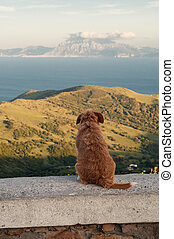 Lonely dog sitting and looking at the mountains and the sea