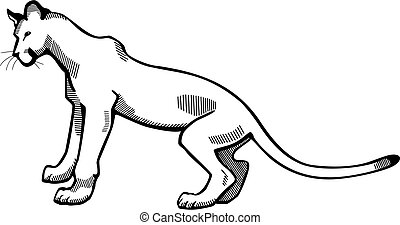 Puma - vector illustration of a puma or mountain lion