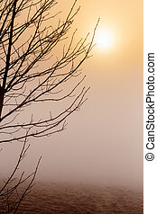Misty morning sunrise over tree - cold misty morning sunrise...