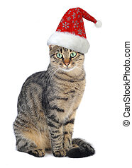Christmas Santa cat on a white background