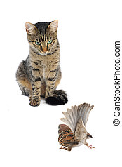 cat with a sparrow on a white background
