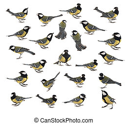 titmouse - version of poses of a titmouse on a white...