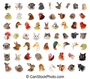 animals and birds - isolated portraits of animals and birds