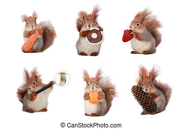 squirrel - proteins hold fruit on a white background
