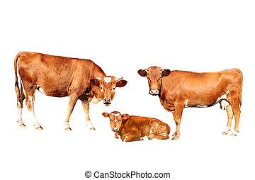 brązowy, krowa