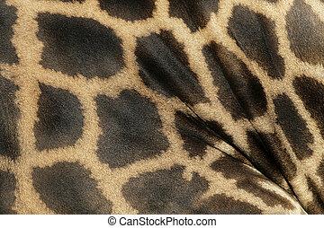 Giraffe, Giraffa camelopardalis, single mammal skin pattern...