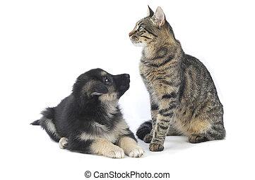 gato, perro