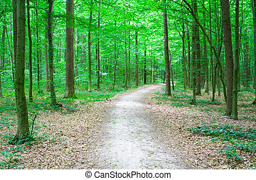 path in forest - path in green forest