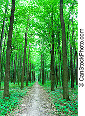 trailway in forest - path in green forest