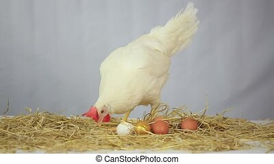 Hen with gold egg