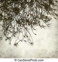 textured old paper background with pine tree branches