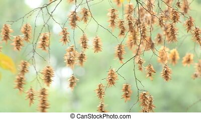 autumn - Branch of autumn tree on wind