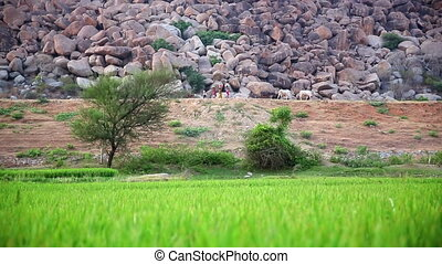 People and cattle passing by rocky hill of large boulders