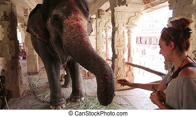 Female tourist feeding elephant with fruits