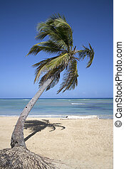 punta cana beach - tropical beach with palm tree taken in...