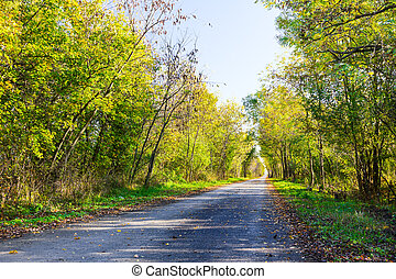 Road through fall forest.