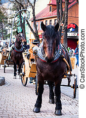 Horse harnessed to sled on the street Krupowki in Zakopane in Poland