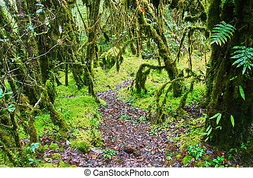deep forest, Intanon mountain ,Chiang Mai, Thailand - deep...