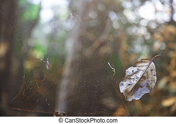 Old spider web - Close-up view on the old spider web in...