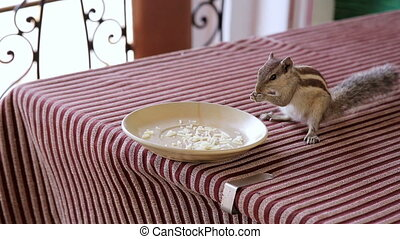 Squirrel eating from plate - Cute little squirrel eating...