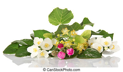 Jasmine branch, linden flowers and buds of rose - Jasmine...