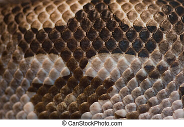 Snake skin - brown and white - Close up part of snake skin -...
