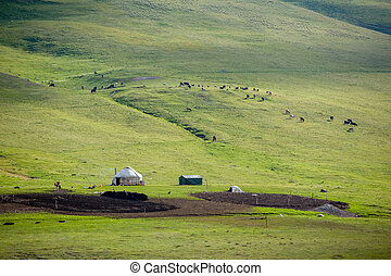 Yurt and livestock in Kyrgyzstan, Tien Shan mountains