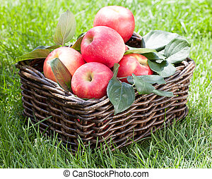 Fresh ripe red apples in basket