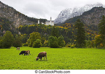 Castle and cows - Beautiful landscape with Neuschwanstein...