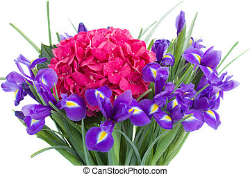 fresh hortensia and iris flowers close up - fresh pink...