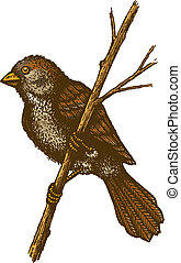 sparrow - Retro illustration of sparrow on the branch