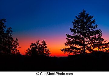 Sunset in Yosemite National Park with tree silhouettes at...