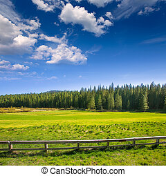 Yosemite meadows and forest in California - Yosemite green...