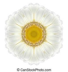 Daisy Mandala Flower Kaleidoscopic Isolated on White