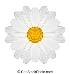 Daisy Mandala Flower Kaleidoscopic Isolated on White - White...