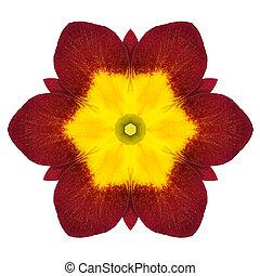 fleur, primevère, isolé, kaléidoscopique, blanc,  Mandala