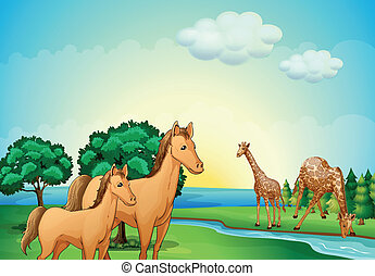 Horses and giraffe near the river - Illustration of the...