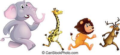 Four wild animals running