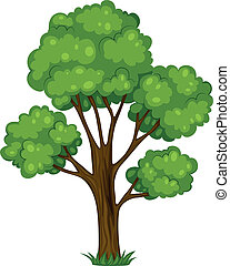 A tall tree - Illustration of a tall tree on a white...