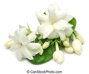 Jasmine flower over white background with selective focus