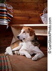 The dog lies under a bench.