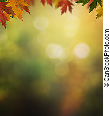 Autumn background with colorful leaves from a maple tree