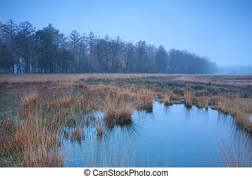 autumn misty fog over swamp, Duurswoudeheide, Friesland,...