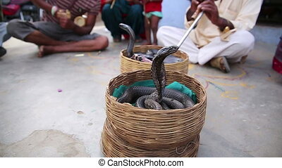 Cobra enchanter, snake charming - Cobra enchanter sitting in...