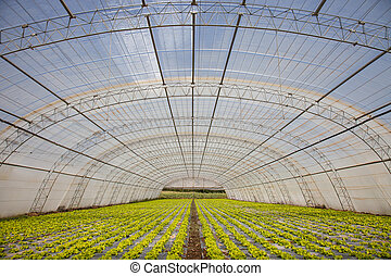 organic food - Photo of a organic food crops
